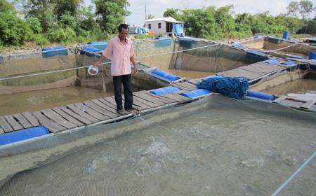 Hà Nam: Hiệu quả từ nuôi cá lồng trên sông Hồng