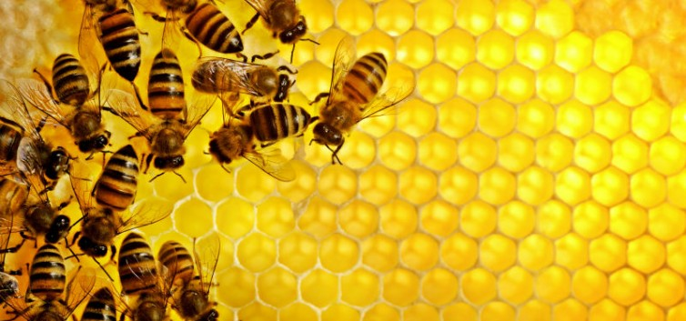 Tìm giải pháp thúc đẩy xuất khẩu sản phẩm mật ong