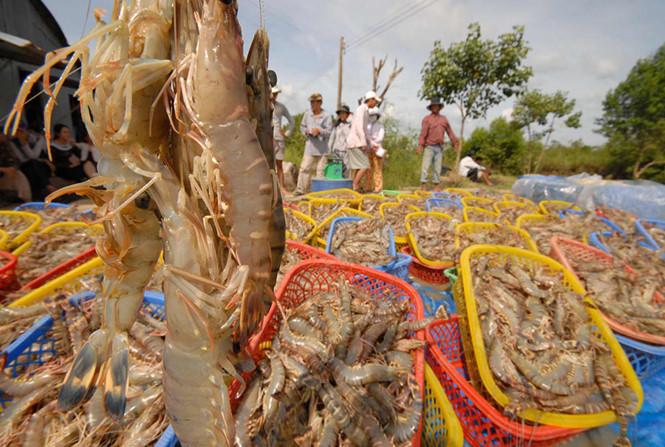 Giải pháp phát triển nuôi trồng thuỷ sản ven biển thích ứng biến đổi khí hậu