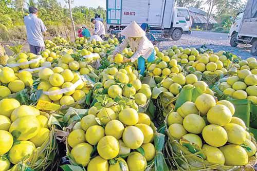Đồng Tháp: Giúp nông dân sản xuất gắn với tiêu thụ đầu ra cho nông sản