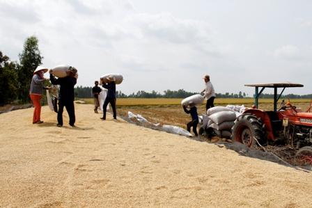 Vĩnh Phúc: Ngành nông, lâm nghiệp và thuỷ sản tiếp tục đóng góp tích cực vào tăng trưởng chung của tỉnh