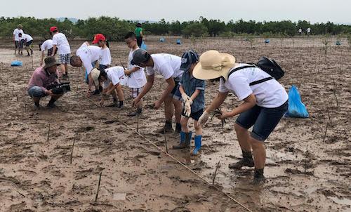 Giao lưu trồng rừng ngập mặn hữu nghị Việt Nam – Nhật Bản