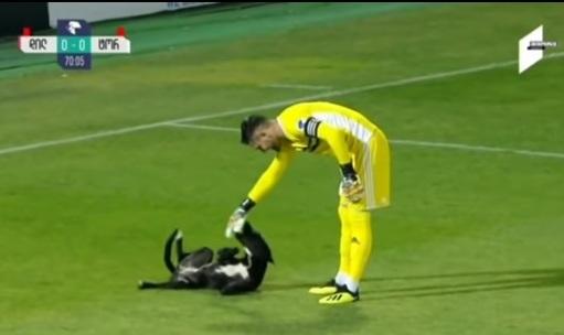 Chú chó gây gián đoạn trận bóng đá Giải vô địch quốc gia Georgia