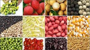 Kiểm tra thực phẩm có nguồn gốc thực vật xuất khẩu trong 2 ngày