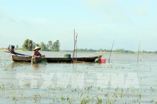 Nguy cơ cao xảy ra ngập lụt ở đồng bằng sông Cửu Long