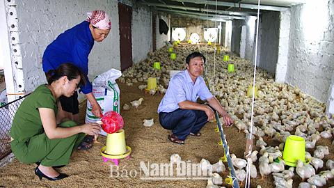 Nam Định phát huy vai trò nông dân trong xây dựng nông thôn mới