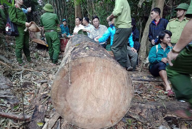 """Không có """"vùng cấm"""" trong xử lý nạn phá rừng tại Quảng Nam"""