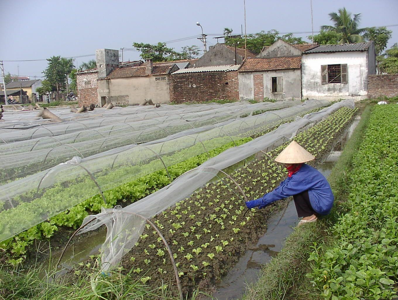 Vĩnh Phúc: Phấn đấu hướng tới thoát nghèo bền vững
