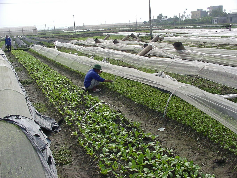 Vĩnh Phúc: bình quân giá trị sản xuất toàn ngành nông nghiệp tăng 3,29%/năm
