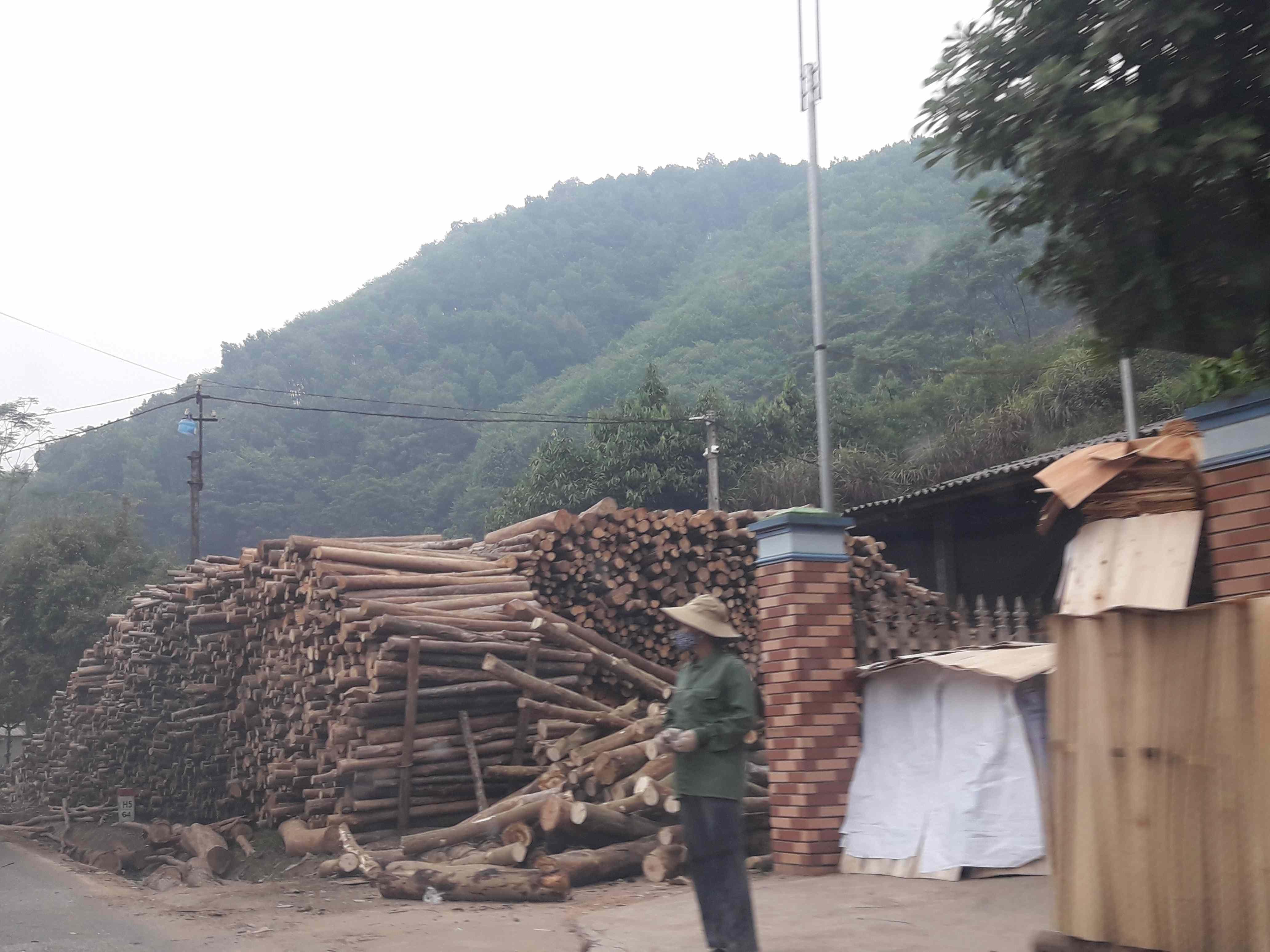 Huyện Thanh Sơn (Phú Thọ) phát triển kinh tế đồi rừng