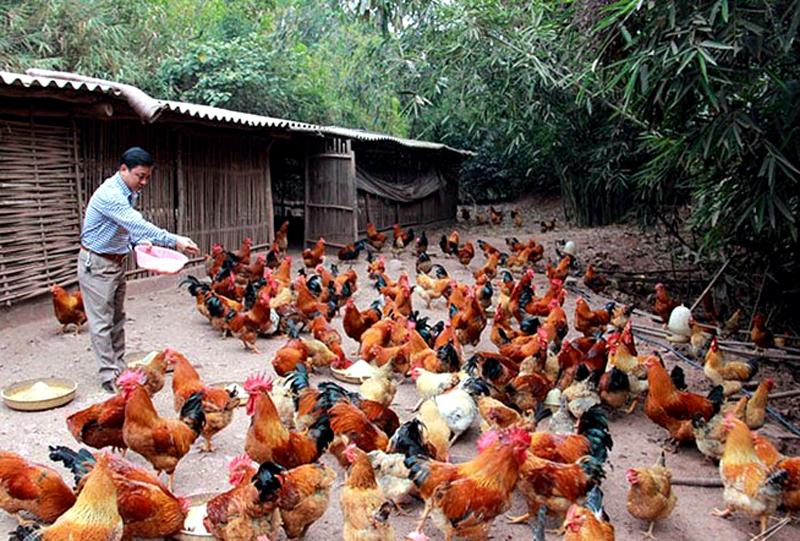 Tái cơ cấu ngành Nông nghiệp ở Quảng Ninh: Những bước đi vững chắc và hiệu quả