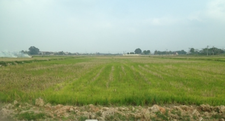 Chuyển mục đích sử dụng đất tại hai tỉnh Thanh Hóa, Tiền Giang