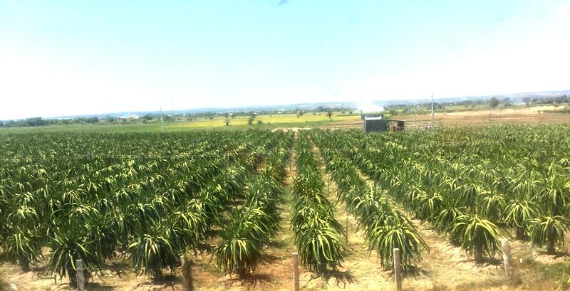 Bình Thuận đẩy mạnh ứng dụng dụng công nghệ cao vào sản xuất nông nghiệp