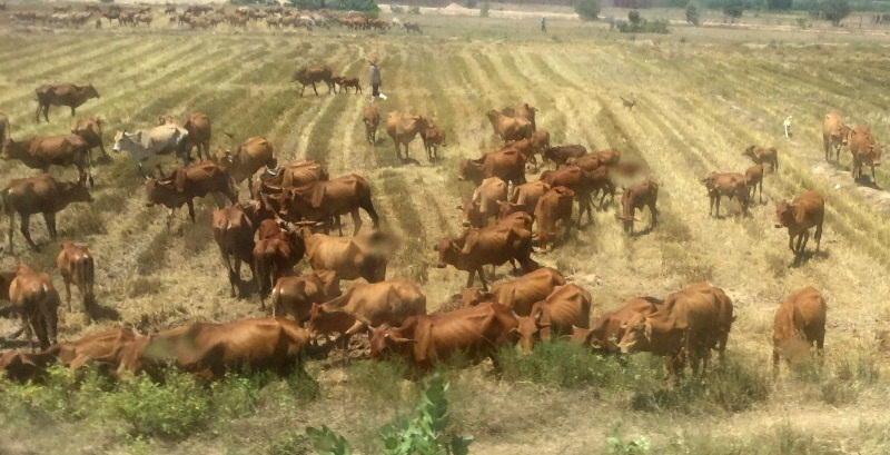 Long An đẩy mạnh tái cơ cấu sản xuất nông nghiệp