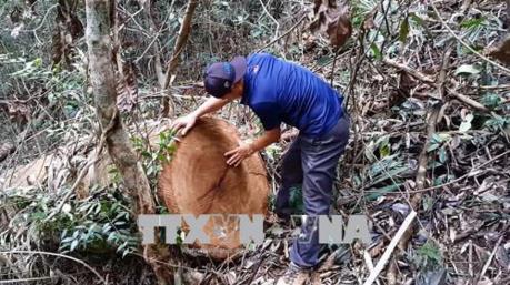 Kon Tum: Không bao che, dung túng hành động xâm hại tài nguyên rừng