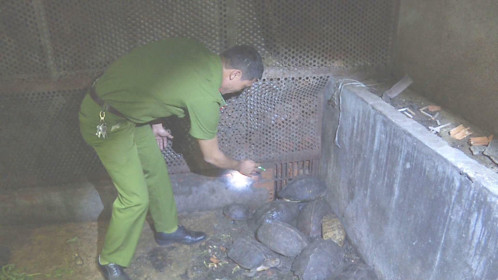Đắk Lắk: Phát hiện vụ nuôi nhốt 51 cá thể động vật hoang dã trái phép