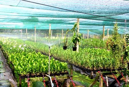 Bình Dương: Trên 2.754 ha đất nông nghiệp ứng dụng công nghệ cao