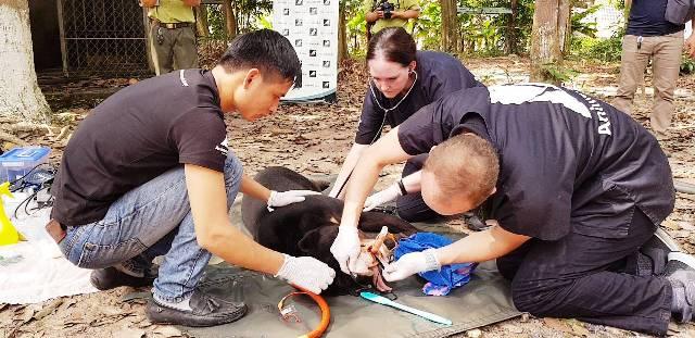 Cứu hộ gấu chó sau 15 năm nuôi nhốt tại Tây Ninh