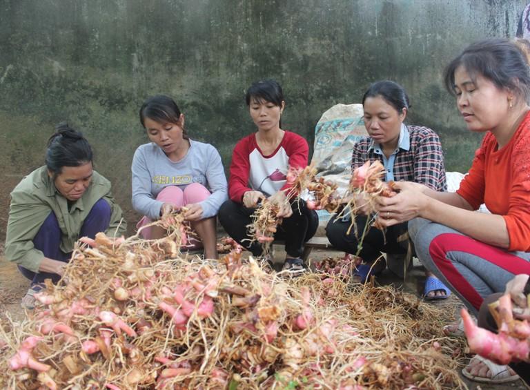 Tam Đảo (Vĩnh Phúc): Chủ động triển khai giải thể các Hợp tác xã nông nghiệp ngừng hoạt động