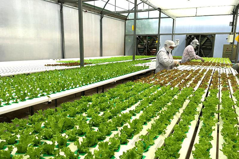 Ứng dụng nông nghiệp 4.0 vào sản xuất nông nghiệp ở Đồng bằng sông Cửu Long