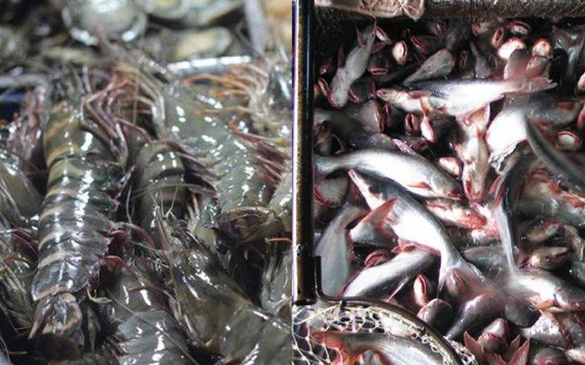 Quy định đối tượng thủy sản nuôi chủ lực