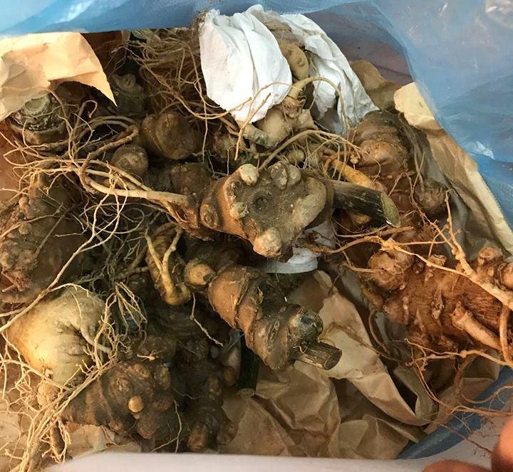 Quảng Nam: Bắt đối tượng rao bán sâm Ngọc Linh giả