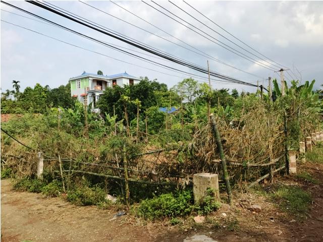 Xử lý dứt điểm tình trạng lấn chiếm sử dụng đất nông trường Tam Đảo