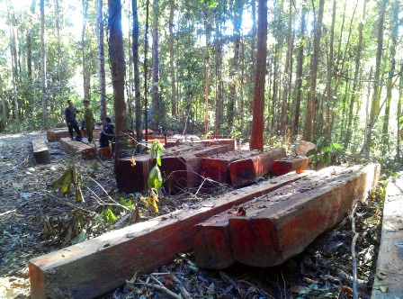 Xử lý nghiêm các sai phạm trong chuyển đổi rừng