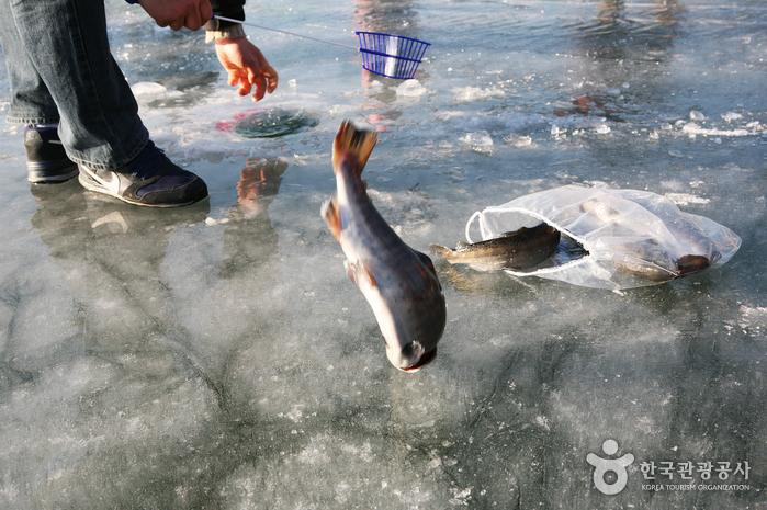 Lễ hội câu cá trên băng tại Hàn Quốc