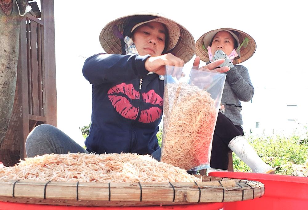 Ngư dân Đà Nẵng được mùa ruốc biển đầu năm