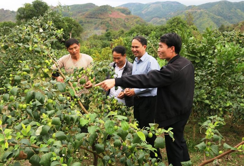 Trồng cây ăn quả trên đất dốc ở Sơn La: Hiệu quả từ chủ trương đúng