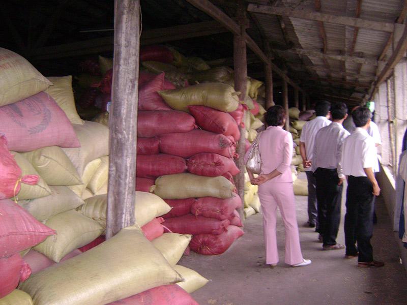 Thúc đẩy tiêu thụ lúa gạo vụ đông xuân tại các tỉnh Đồng bằng sông Cửu Long