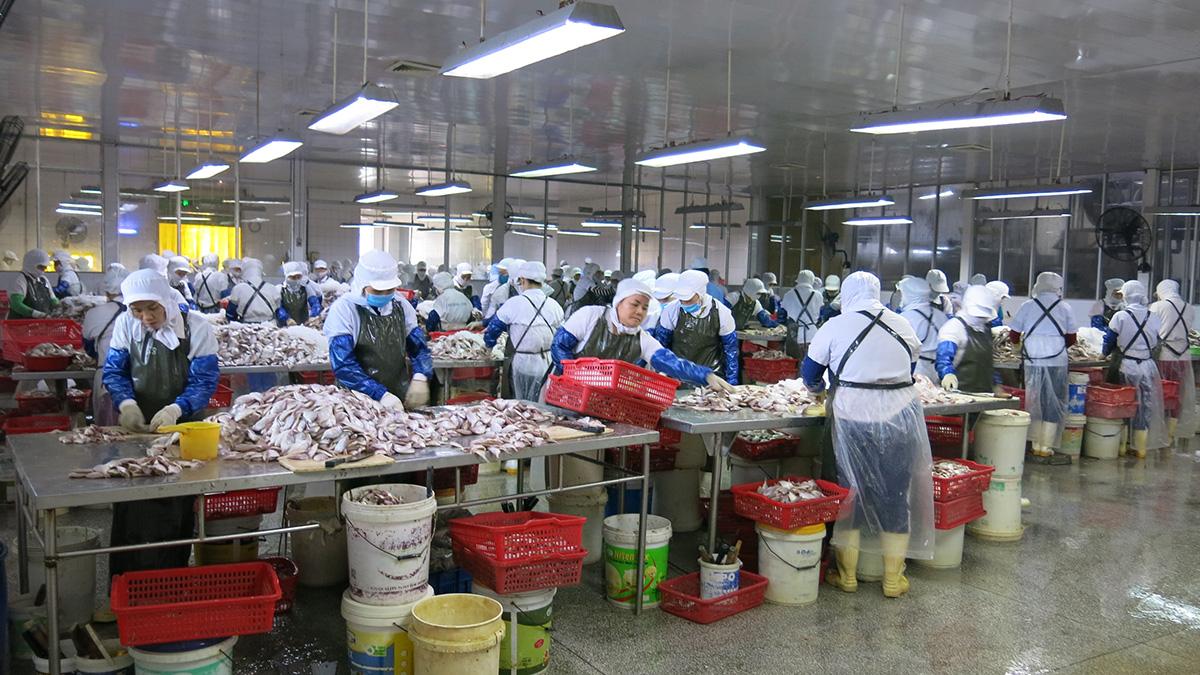 Đà Nẵng ưu tiên hỗ trợ ngư dân và doanh nghiệp chế biến thủy sản