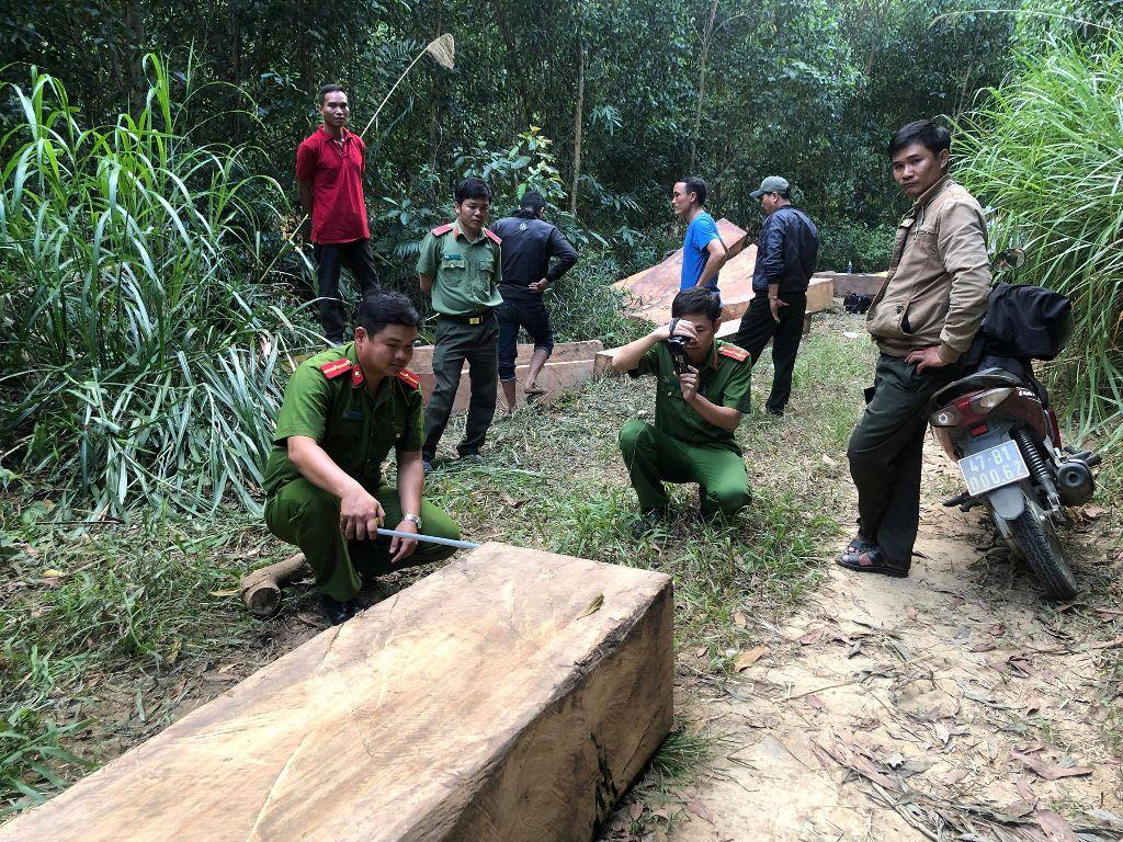 Đắk Lắk: Phát hiện vụ vận chuyển 14m3 gỗ lậu