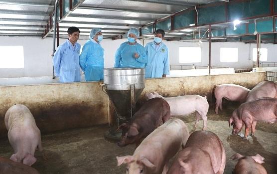 Thực hiện nghiêm các quy định phòng chống dịch tả lợn châu Phi