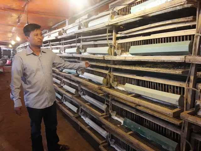 Vĩnh Phúc: Hướng đi hiệu quả từ mô hình trang trại nuôi chim cút