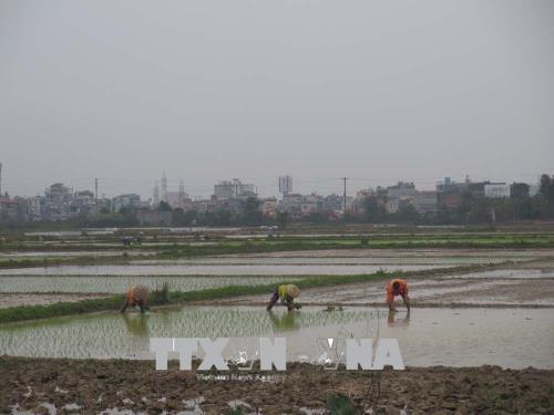 Các địa phương cơ bản hoàn thành lấy nước phục vụ gieo cấy
