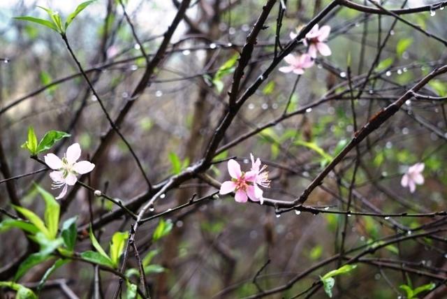 Bắc Bộ và Bắc Trung Bộ mưa dông diện rộng, cảnh báo mưa lớn ở vùng núi
