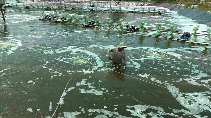 Đồng Nai: Giá trị sản xuất ngành thủy sản đạt gần 2,1 nghìn tỷ đồng