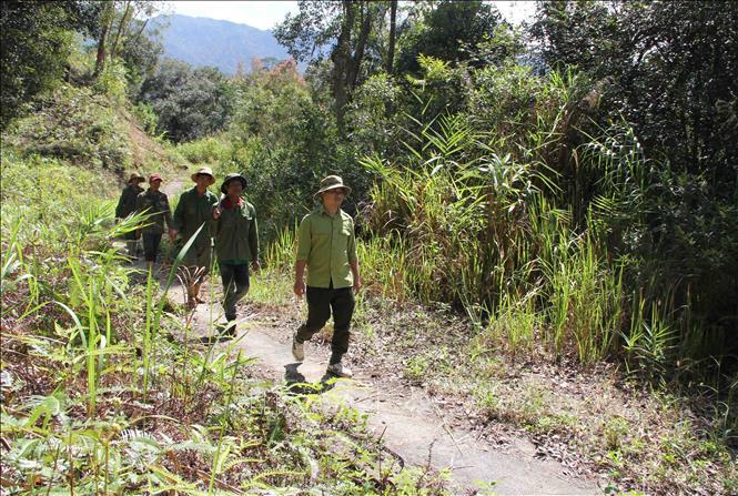 Đắk Lắk: Chủ động phòng, chống cháy rừng mùa khô