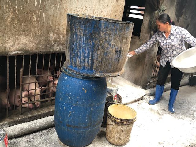Nam Định gấp rút tiến hành các biện pháp nhằm hạn chế dịch tả lợn châu Phi