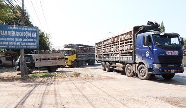 Đồng Nai tiếp tục chủ động  phòng, chống dịch tả lợn châu Phi