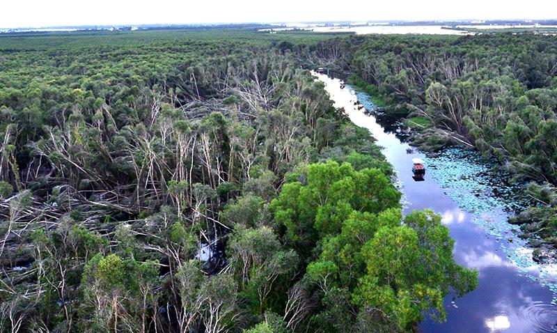 Khám phá rừng tràm nguyên sinh ở vùng Đồng Tháp Mười