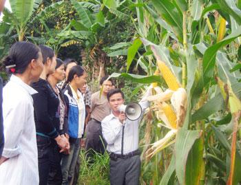 Ban hành Danh mục bổ sung giống cây trồng được phép sản xuất, kinh doanh ở Việt Nam