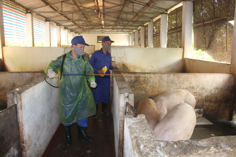 Quân khu 4 chủ động phòng chống dịch tả lợn châu Phi