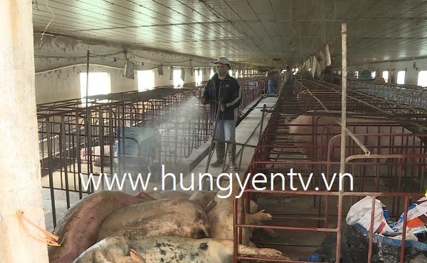 Khoái Châu quyết liệt dập dịch tả lợn châu Phi