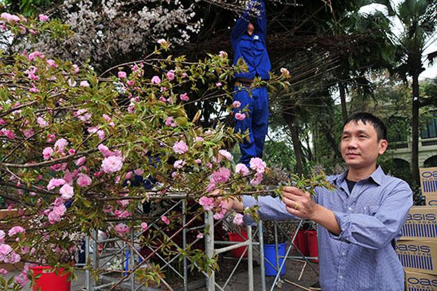 Lễ hội Hoa anh đào Nhật Bản 2019
