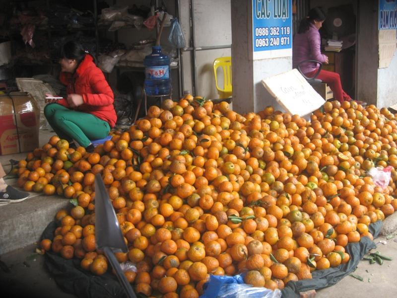 Cam sành Hà Giang được mùa nhưng mất giá  