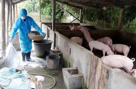 Cứu ngành chăn nuôi!