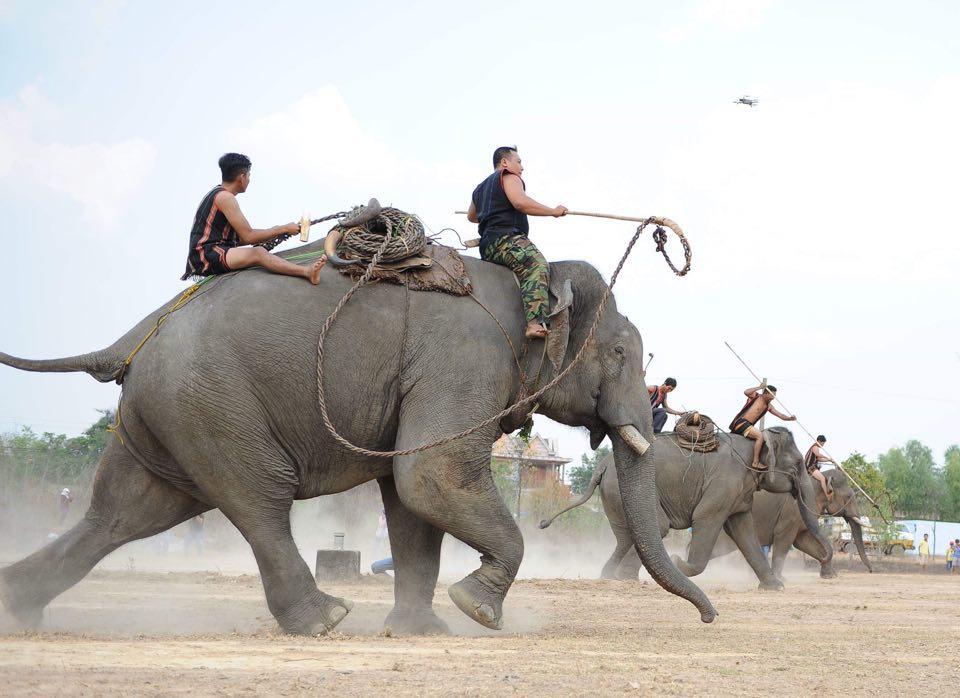 Tái hiện cảnh săn bắt, thuần dưỡng voi rừng của đồng bào dân tộc Tây Nguyên